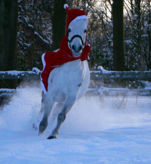 Janine-kerstmuts2-584
